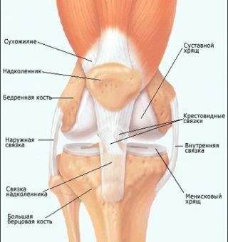 от боли в коленном суставе